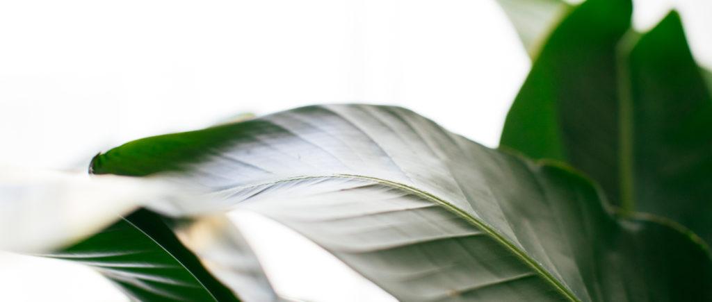 New leaf –workshop ten, digital marketing consultants Hong Kong